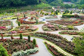 公園 花 フェスタ 記念 2021年 花フェスタ記念公園